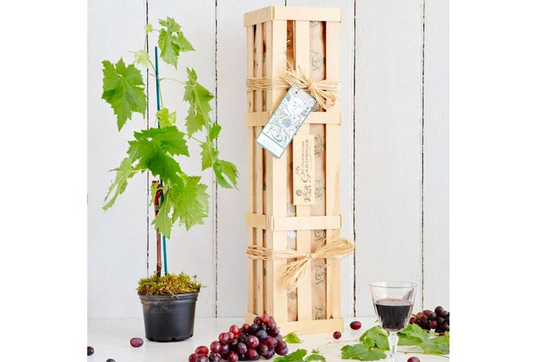 Grow your own red wine gift crate